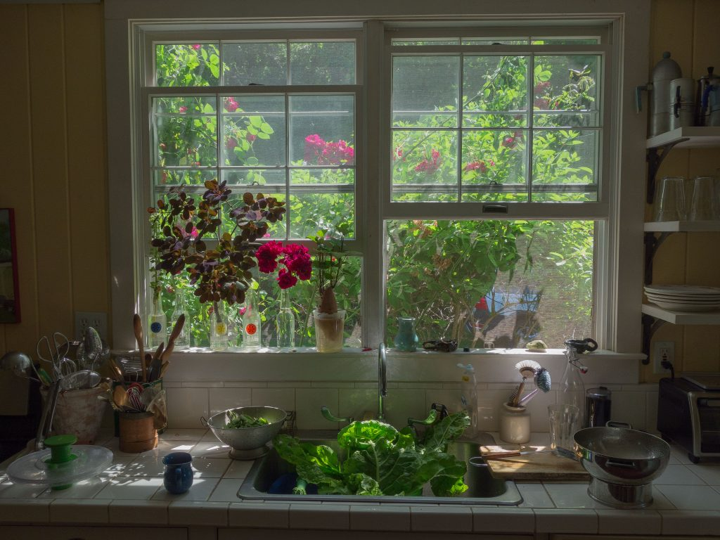 kitchen sink, dishes, swiss chard in calendar, roses in vase and out the window