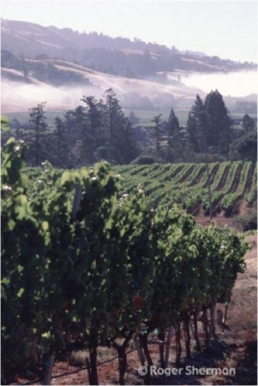 Anderson Valley Vista
