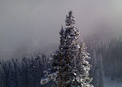 Snow Covered Tree, Aspen Highlands