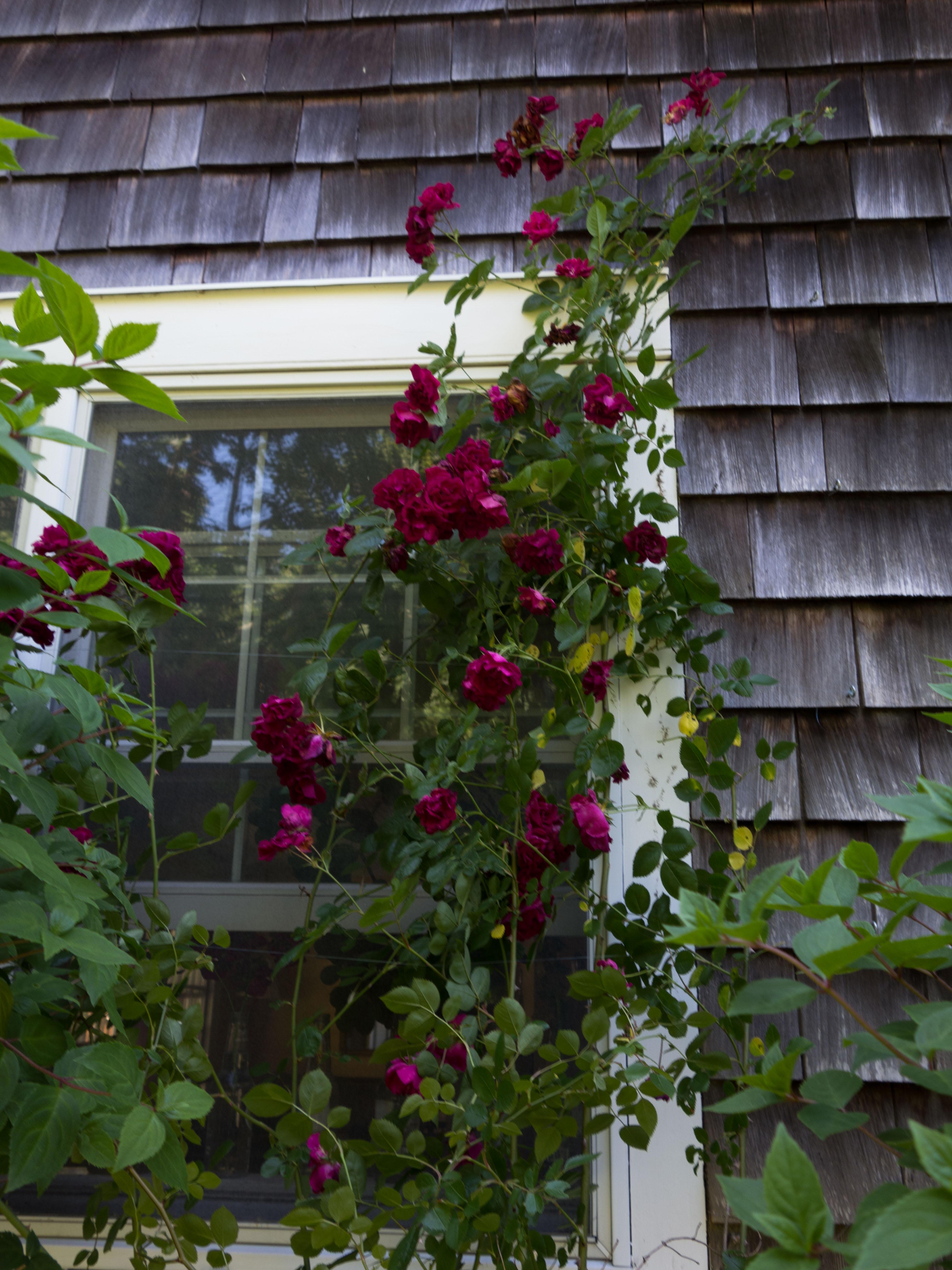 EMo-garden6.24-26.16-7