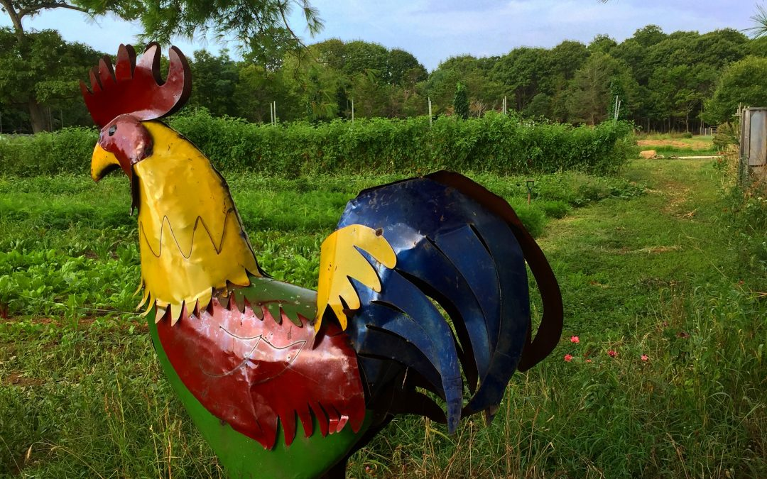 Rooster Sculpture in Field